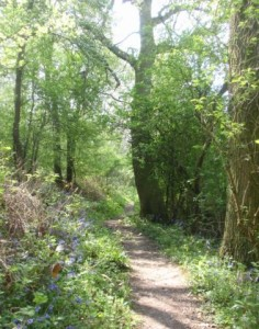 Foothpath through Withycombe Woods
